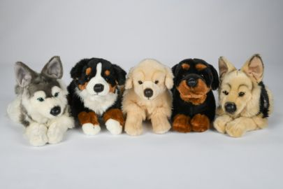 Berner,Retriever,Schäfer,Husky
