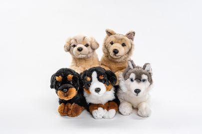 Berner,Retriever,Schäfer,Husky,Rottweiler