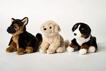 Schäferhund, Retriever, Berner