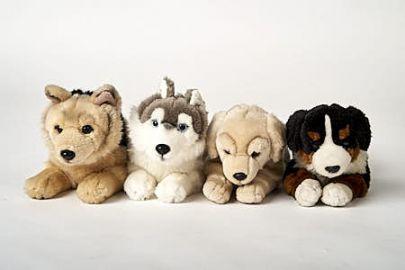 Berner Sennenhund,Husky,Retriever,Schäfer