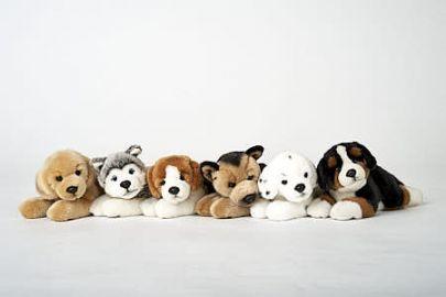 Schäferhund, Retriever, Berner, Dalmatiner, Beagle, Husky