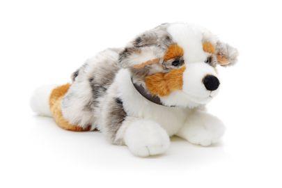Austalischer Schäferhund