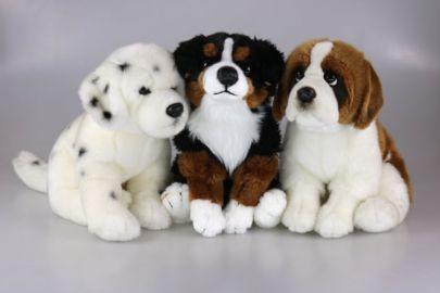 Dalmatiner,Bernhardiner,Berner Sennenhund
