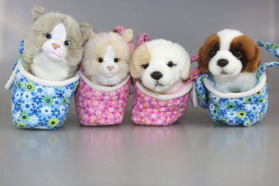 Hunde, Katze in Tasche