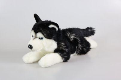 Husky schwarz