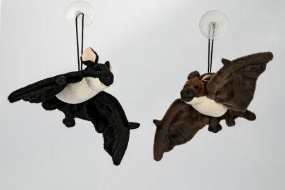 Fledermaus mit Saugknopf