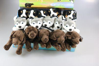 Rottweiler,Berner,Mops,Jack Russell,Husky mit Leine