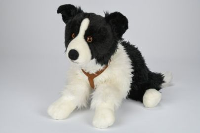 Border Collie mit Geschirr