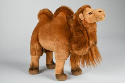Baktrische Kamel