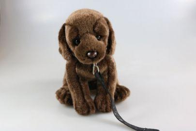 Labrador mit Leine
