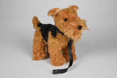 Airedale Terrier mit Leine