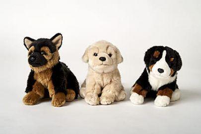 Schäferhund, Retriever, Berner  Sennenhund mit Leine