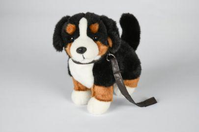 Berner Sennenhund mit Leine