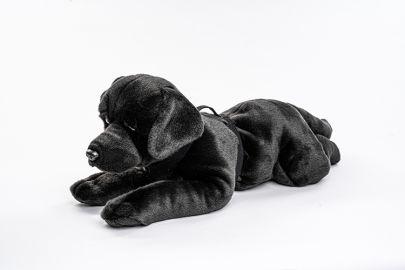 Labrador mit Geschirr